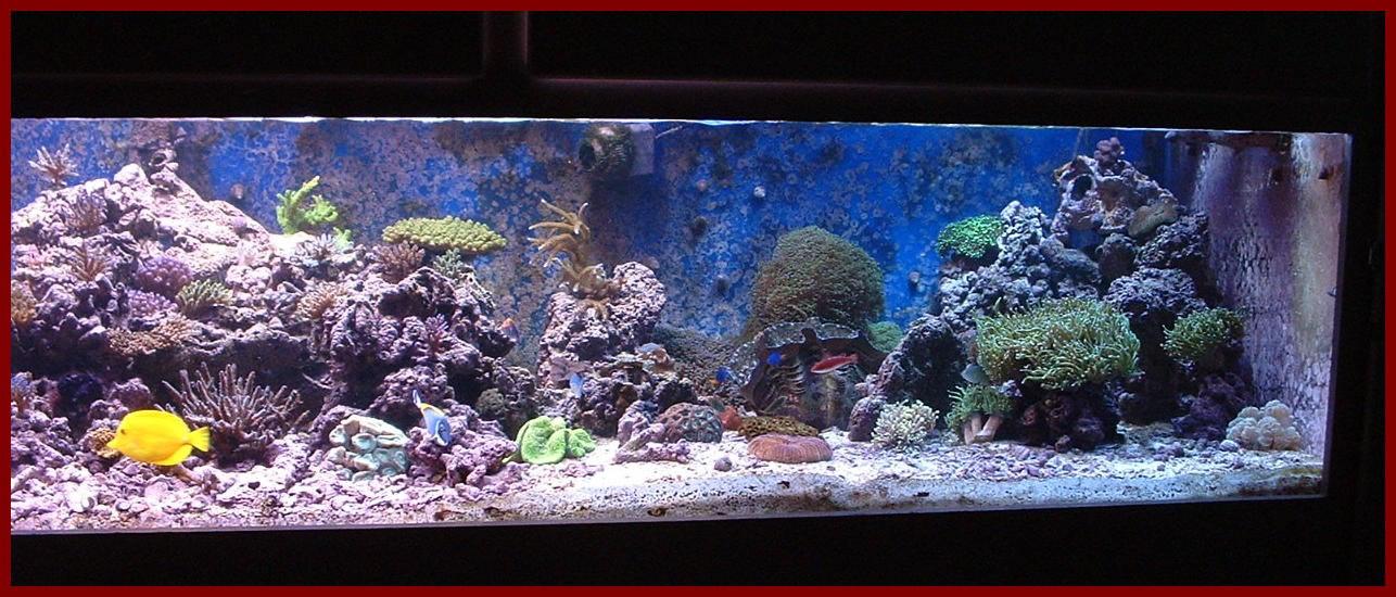 Jean Paul 39 S Coral Reef Tank